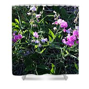 Sweet Pea In Tahoe Shower Curtain