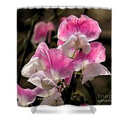 Sweet Peas 1 Shower Curtain