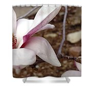 Sweet Pink Magnolia Shower Curtain