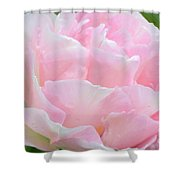 Sweet Pink Tulip Shower Curtain
