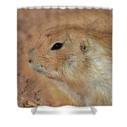 Sweet Profile Of A Prairie Dog Playing In Dirt Shower Curtain