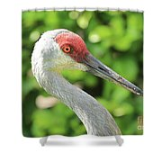 Sweet Sandhill Profile Shower Curtain