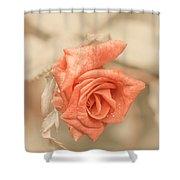 Sweet Sensation Shower Curtain