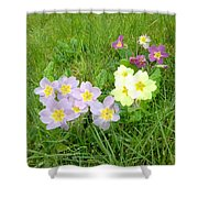 Sweet Sensations 1007 Shower Curtain