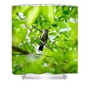 Sweet Song Mother Bird Shower Curtain