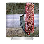 Sweet Song  Shower Curtain