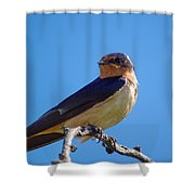 Sweet Swallow Shower Curtain
