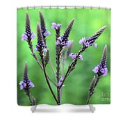 Sweet Vervain Shower Curtain