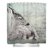 Sweet Young Deer Shower Curtain