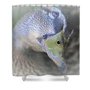 Sweetest Mallard Expression Shower Curtain