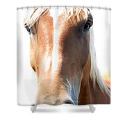 Sweetie Shower Curtain
