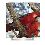 Sweetness - Scarlet Macaws Shower Curtain