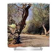 Sweetwater 7 Shower Curtain