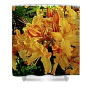 Sweetwater Summer Shower Curtain