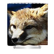 Swift Fox With Oil Painting Effect Shower Curtain