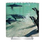 Swim Race - African Penquins Shower Curtain
