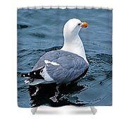 Swimmin' Away Shower Curtain