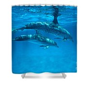 Swimming Dolphins Shower Curtain