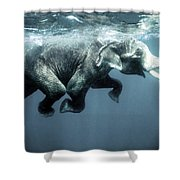 Swimming Elephant Shower Curtain