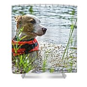 Swimming Family Dog Shower Curtain