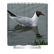 Swimming Gull Shower Curtain
