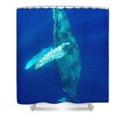 Swimming Humpback Shower Curtain