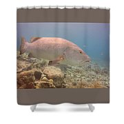 Swimming Right Along Shower Curtain