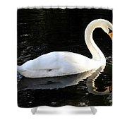 Swimming Swan Shower Curtain