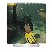 Swimming With The Sharks Shower Curtain
