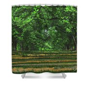 Swirls And Stripes Shower Curtain