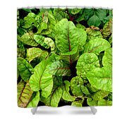 Swiss Chard In A Vegetable Garden 4 Shower Curtain