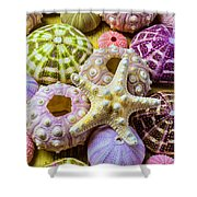 Syarfish And Sea Urchins Shower Curtain