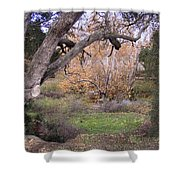 Sycamore Grove Fall Shower Curtain