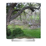 Sycamore Grove Shower Curtain