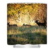 Sycamore Grove Series 10 Shower Curtain