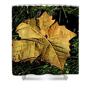 Sycamore Leaf Shower Curtain