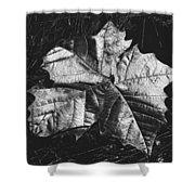 Sycamore Leaf Digital Shower Curtain
