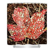 sycamore maple Autumn leaf Shower Curtain