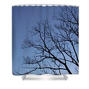 Sycamore Silhouette Shower Curtain