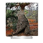Sycamore Tree And Fall Leaves Shower Curtain