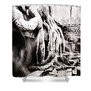 Sycamore Tree Overgrowing Ruins- Cambodia Shower Curtain