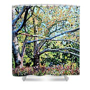 Sycamore Trees At The Zoo Shower Curtain