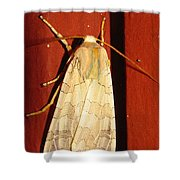Sycamore Tussock Moth Shower Curtain