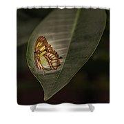 Sylvia- 2 Shower Curtain