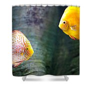 Symphysodon Discus Fishes Shower Curtain