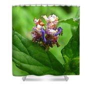 Synchlora Aerata Caterpillar Shower Curtain