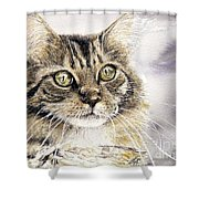 Tabby Cat Jellybean Shower Curtain