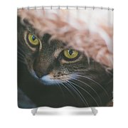 Tabby Cat Looking From Beneath A Blanket  Shower Curtain