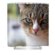Tabby Cat Portrait Shower Curtain