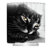 Tabby Cat Selective Color Shower Curtain